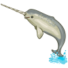 Norman The Narwhal