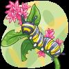 Cali Caterpillar