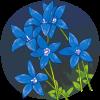 Royal Bluebell