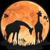 Nighttime Giraffes