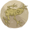 Dried Frog